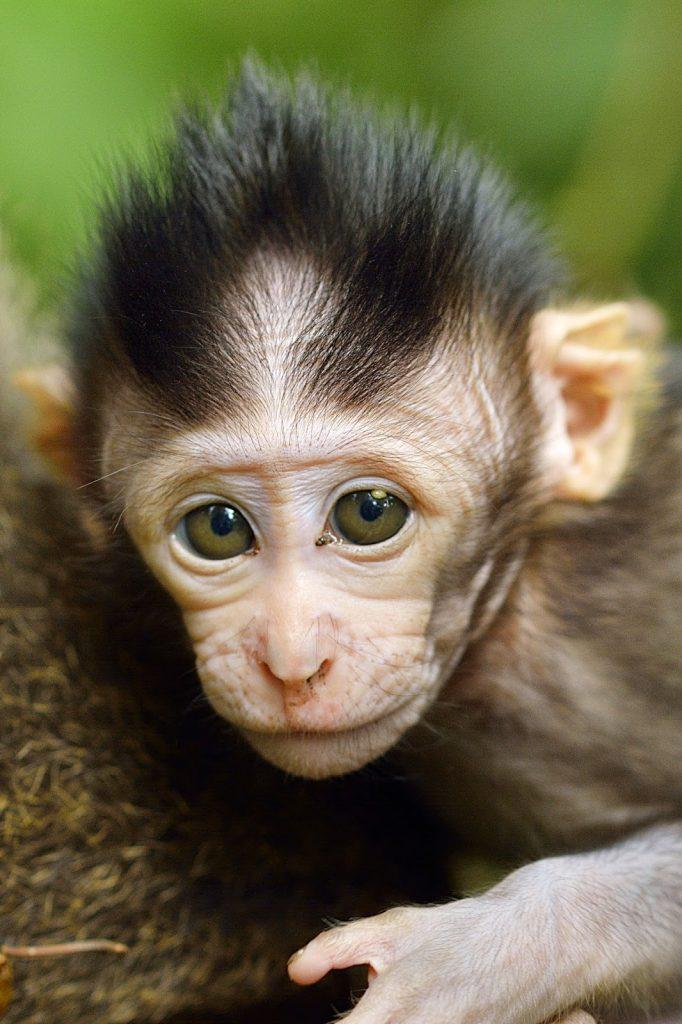 Travel: Monkeyforest Ubud