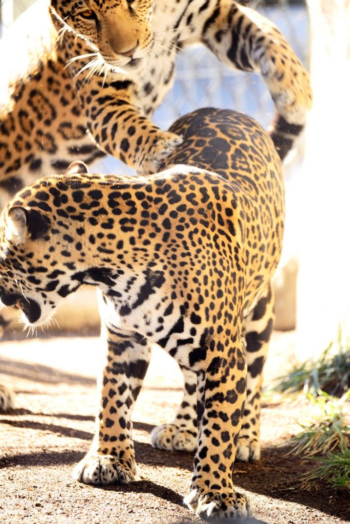 The Animals of San Diego Zoo