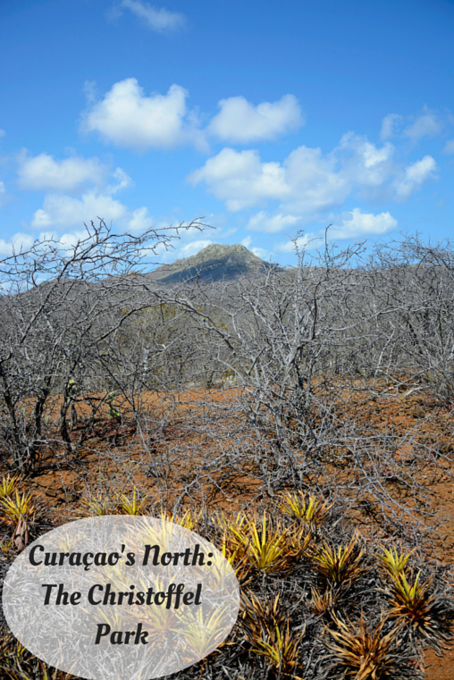 Curaçao's North: The Christoffel Park